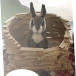 ウサギと平板積み木